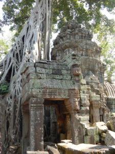 Ta Prohm Kambodscha
