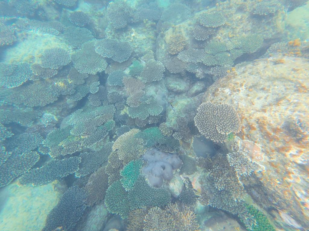 Korallen Koh Rong